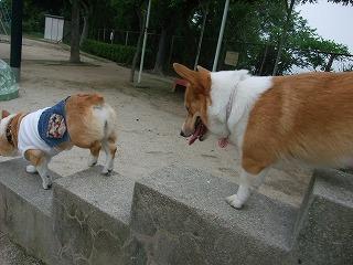 2011_0614散歩0039.jpg