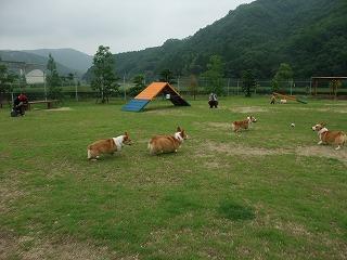 2011_0619御津のラン0032.jpg