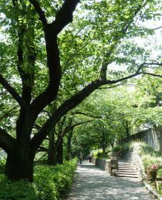 2012.05.28 江戸川橋公園