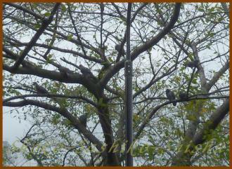 2012.09.18 1 鳩の木