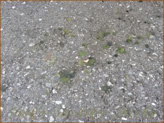 2012.09.25 緑 ムシ虫