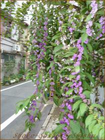 2012.10.19 紫式部