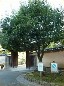 2012.10.27 入り口 江戸川橋公園