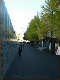 2012.10.29 通り 八一記念博物館
