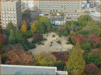 2012.11.22 1 大隈庭園