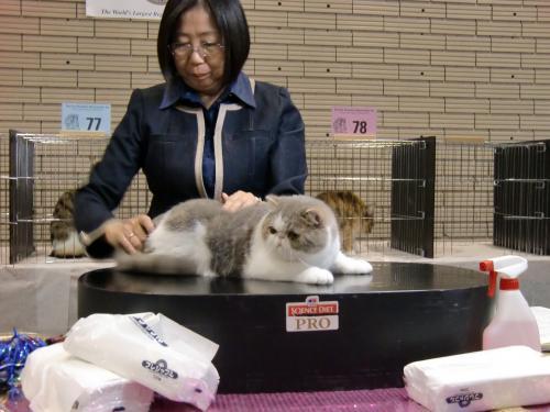 kosuke+show+120_convert_20120507025048.jpg