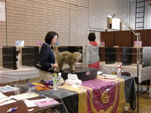 kosuke+show+181_convert_20120515231932.jpg