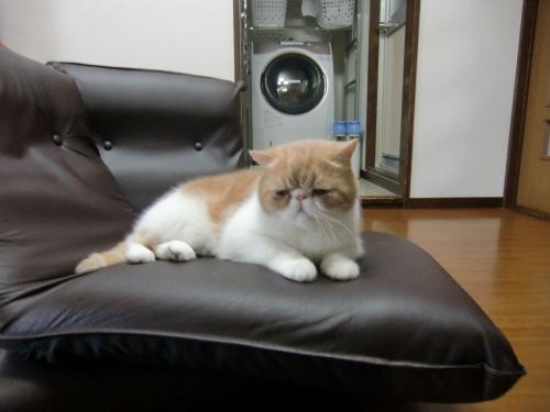 sasukosu+zaisu+024_convert_20120623010733.jpg