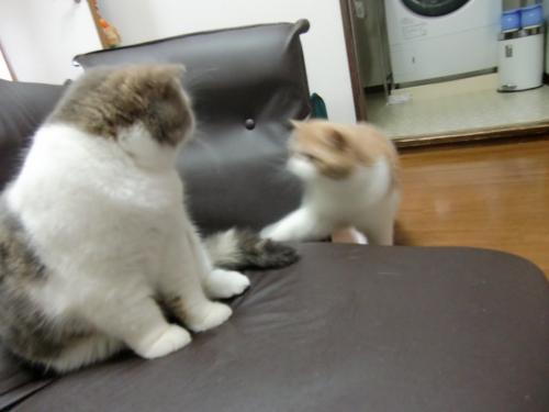 sasukosu+zaisu+060_convert_20120623011011.jpg