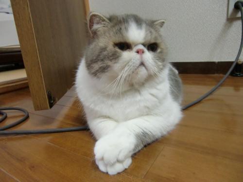 sasukosu+zaisu+077_convert_20120623011306.jpg