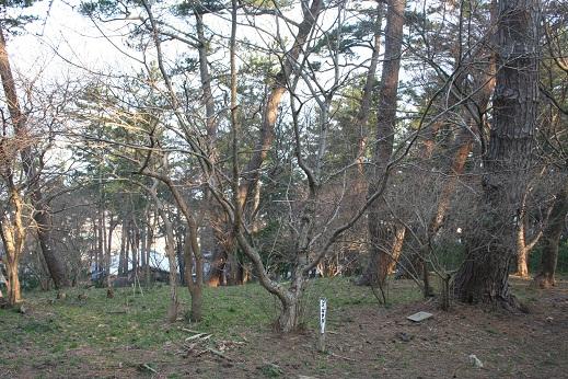159 20120407 mizunara tori 15per