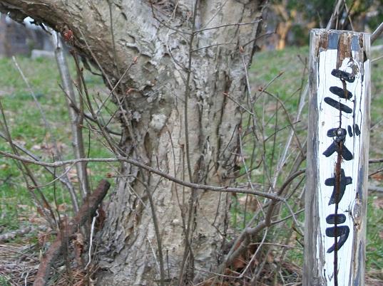160 20120407 mizunara tori 40per