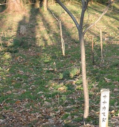 202 20120407 nanakamado tori 30per