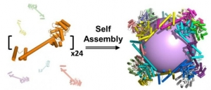 self-assembles protein cage