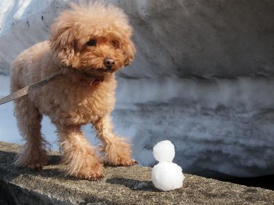 雪だるま作った!