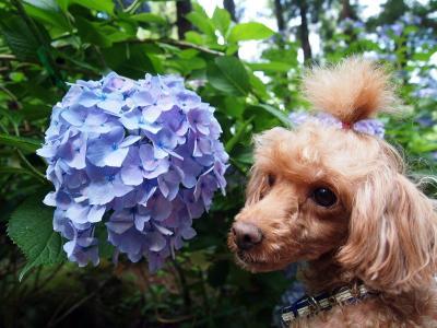 べるちゃん、紫似合うね~