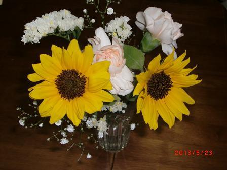 マロちゃんにお花