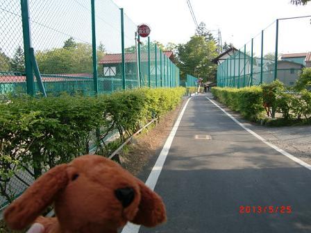 左側がテニスコート