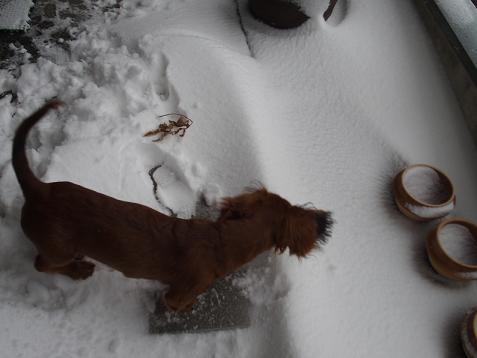 雪が溶けてく~