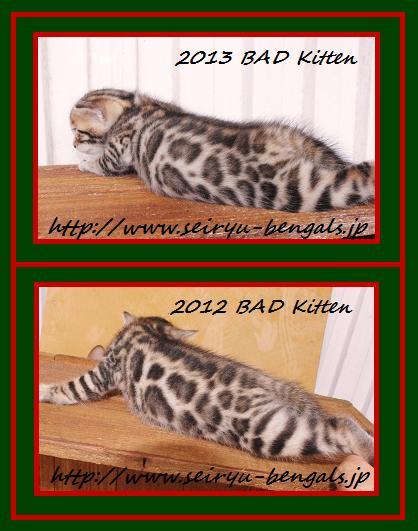 Bad kitten比較