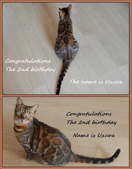 Uzura Birthday