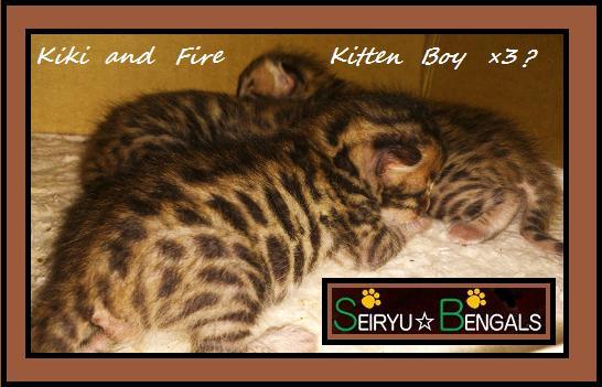 Kiki Kitten