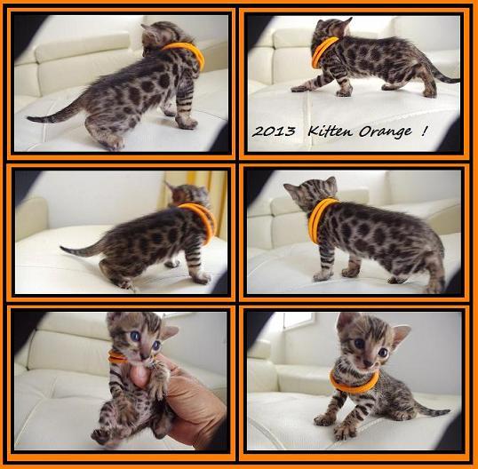2013 Kitten Orange
