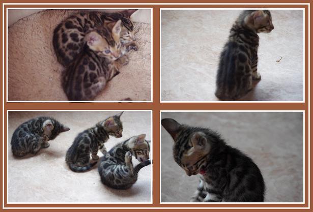 2013 Kitten 猫舎
