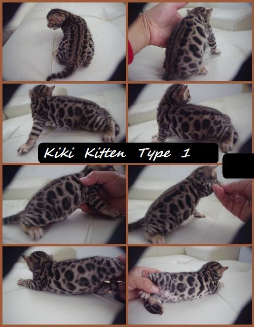 KIKI KITTEN TYPE 1-1