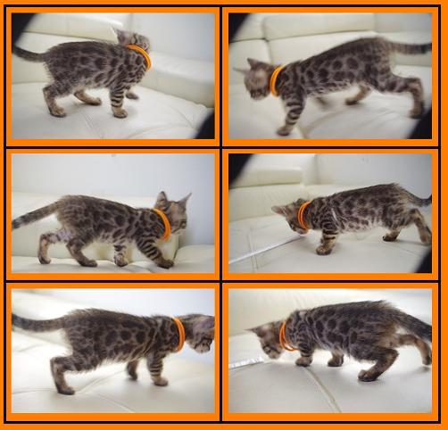 2013 Kitten オレンジ2