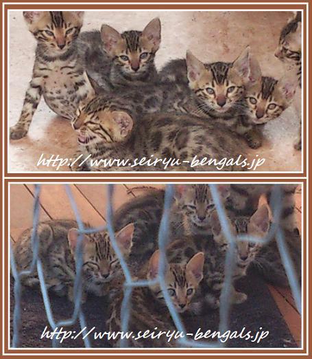 2013 Kitten 寝起き