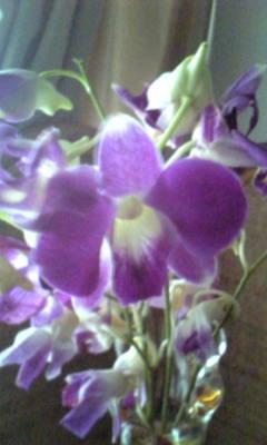Image203_20120809094453.jpg