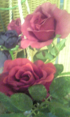 Image602_20120827094431.jpg