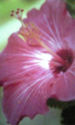 Image700_20121003095207.jpg