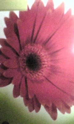 Image898_20121219095508.jpg