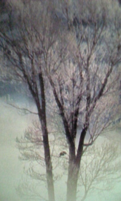 Image928_20121229095700.jpg