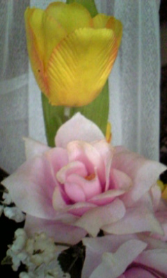 Image936_20130103095019.jpg