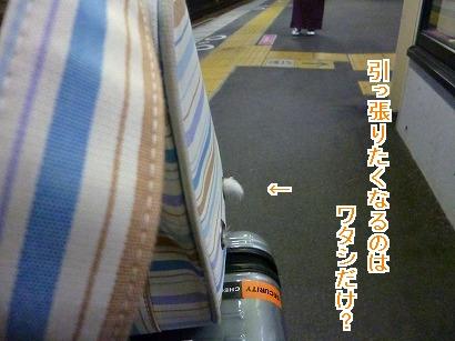P1040962.jpg