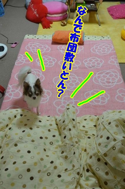 DSC_0092_20121002212216.jpg
