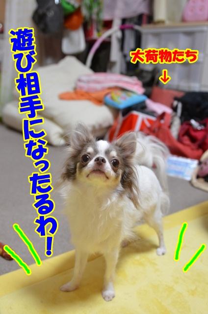 DSC_0115_20121002212215.jpg