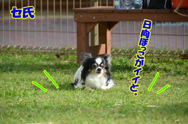 DSC_0445_20121018214044.jpg