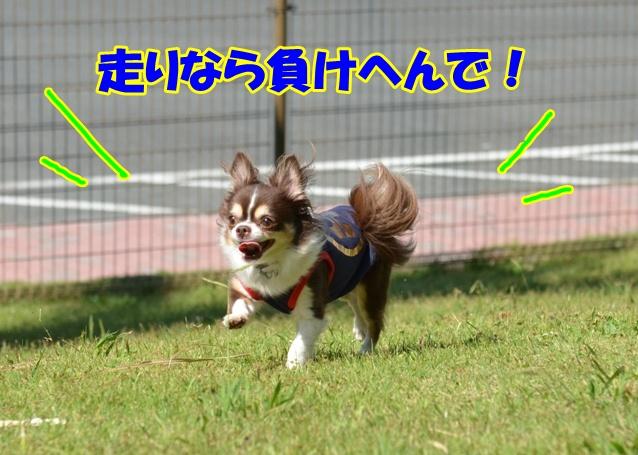DSC_0866_20121017154533.jpg