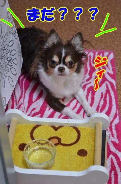 DSC_1234_20121020205709.jpg