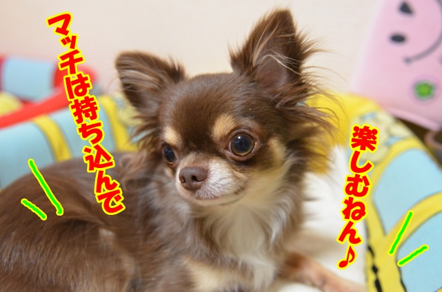 DSC_1253_20121028215514.jpg
