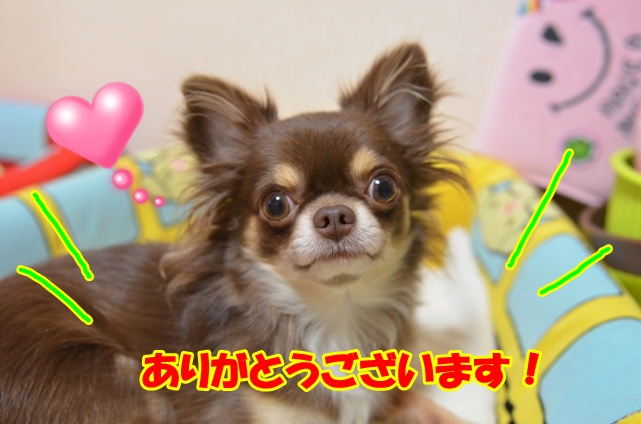 DSC_1255_20121025215851.jpg