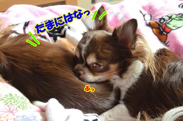 DSC_1336_20121027220825.jpg