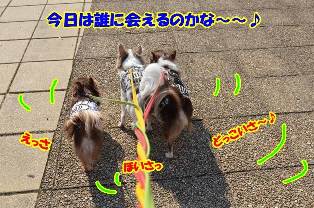 DSC_1484_20121031204437.jpg