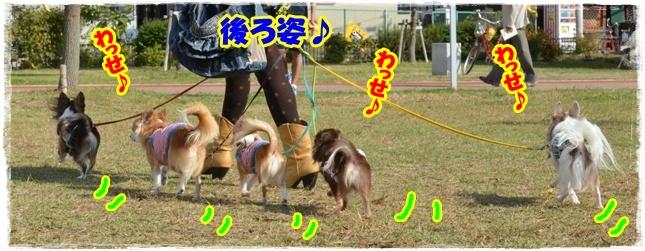 DSC_1500_20121102214522.jpg