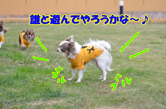 DSC_1825_20121116221950.jpg