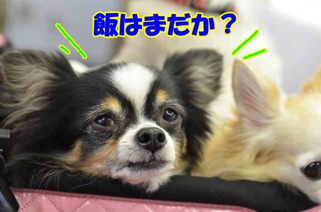 DSC_2031_20121120223103.jpg